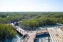 Jubail Mangrove Park - Abu Dhabi