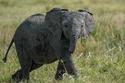 3. Elephants