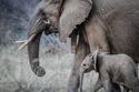 1. Elephants