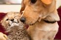 2. Kasi the Cheetah and Mtani the Labrador