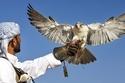 10. Falconry