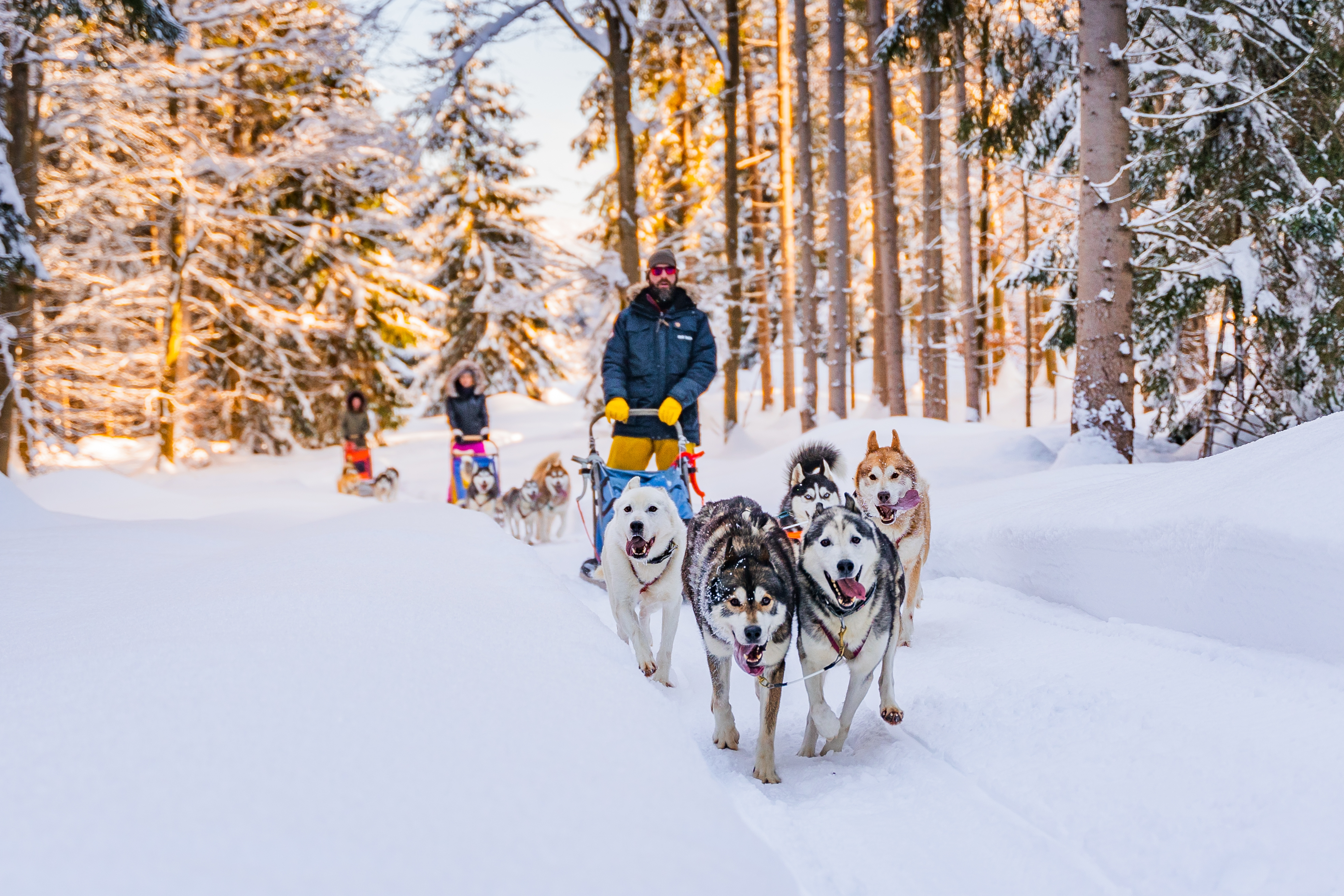 Unique Animal Experiences You Must Try in Austria