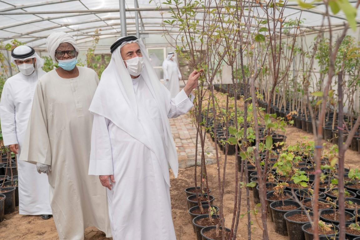 Sharjah's Kalba To Transform Into Green Forest