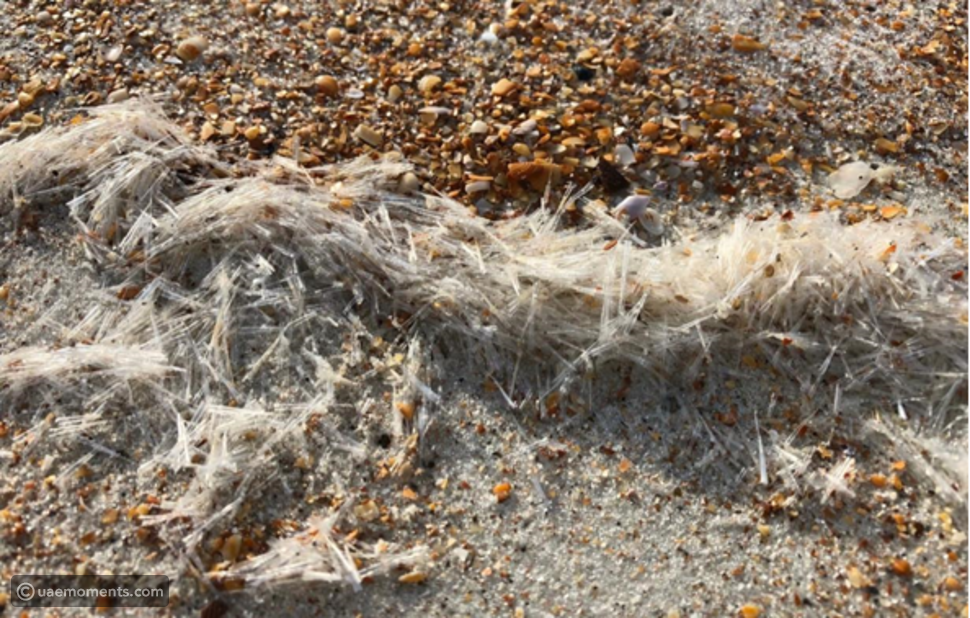 Pictures: Marine Creatures Found In Dubai Are Harmless