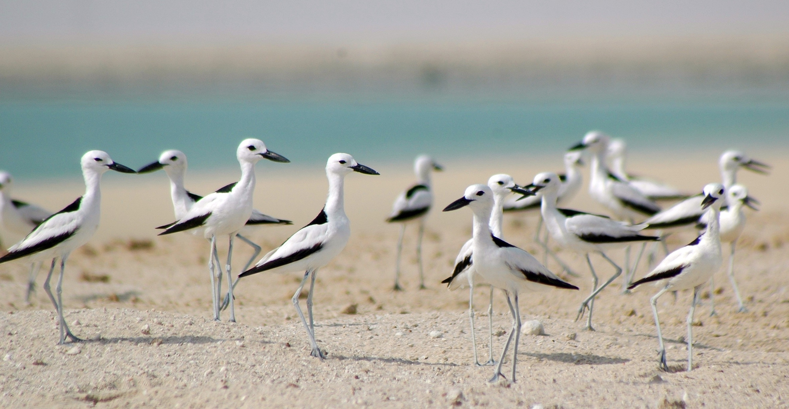 Abu Dhabi Launches Red List for Wildlife Species